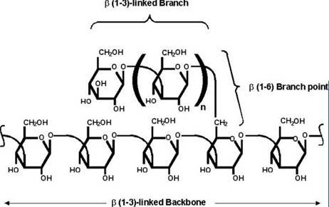 酵母葡聚糖,武汉百特纯大分子科技有限公司